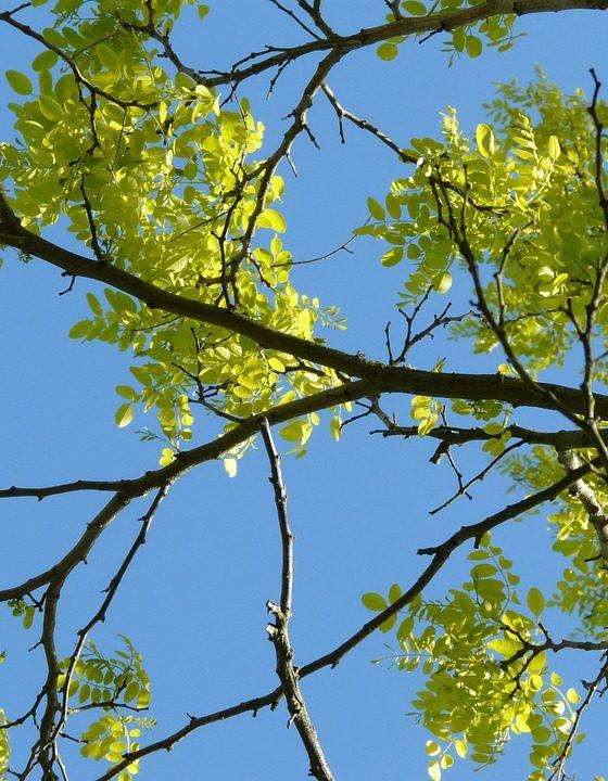 alberi piante